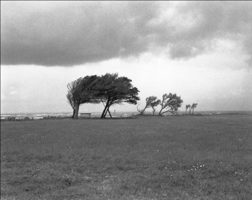 Ile d'Oleron -3 - 1998